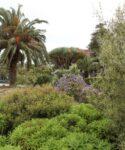 Composición de plantas termófilas. Parque central