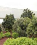 Jardín de plantas autóctonas. SEGAI