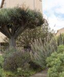 Jardin del drago. Facultad de Ciencias. Sección de Biología