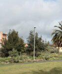 Parque de flora canaria. Escuela Superior de Ingeniería y Tecnología