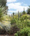 Jardín de plantas autóctonas. Facultad de Humanidades