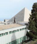 Ejemplar piramidal de pino canario (Pinus canariensis).Facultad de CC Sociales y de la Comunicación