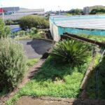 Espacio para el futuro jardín de plantas aromáticas
