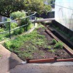Solar baldío del Jardín del Tagasaste