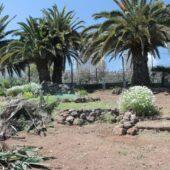 Poda y eliminación de flora exótica