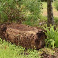 Banco de tronco de palmera