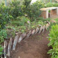 Bordura con vainas de hojas de palmera