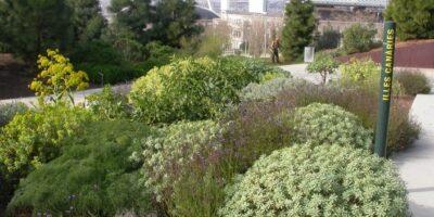 Composición de plantas canarias. Jardín Botánico. Barcelona