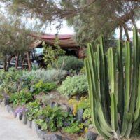 Jardín con especies de costa. Buenavista del Norte. Tenerife