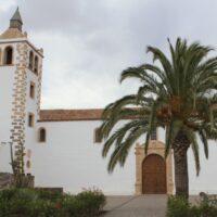 Palmera canaria (Phoenix canariensis). Plaza Santa María. Betancuria. Fuerteventura