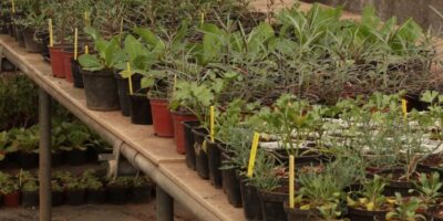 Cultivo de plantas en macetas