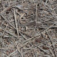 Astillado de hojas secas de palmera