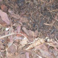 Depósito directo sobre el suelo de hojas y material verde