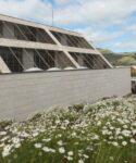 Campo de magarzas (Argyranthemum frutescens). Facultad de CC Sociales y de la Comunicación