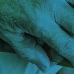 curso de economía social y del bien común