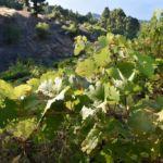 Fotografía de viñedos