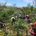 Fotografía de un grupo de personas trabajando en un huerto ecológico