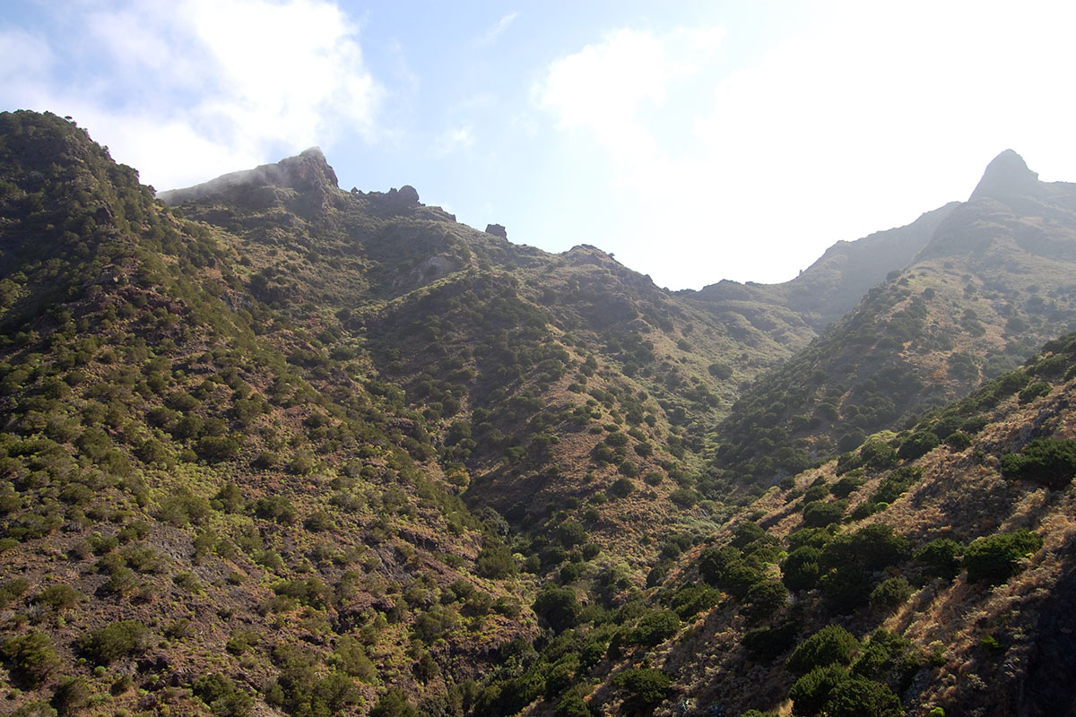 Bosque termófilo en Afur (Tenerife).